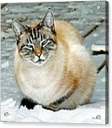 Zing The Cat On The Porch In The Snow Acrylic Print
