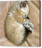 Zing The Kitten Acrylic Print
