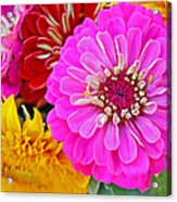 Zinnia Flower Acrylic Print