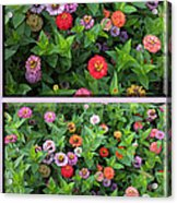 Zinnias 4 Panel Vertical Composite Acrylic Print