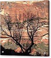 Zion Canyon Tree #1 Acrylic Print