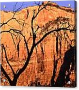 Zion Tree Acrylic Print