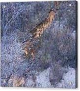 Zion's National Park Reflection Acrylic Print