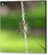 Zipper Spider Acrylic Print