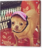 Zoe's Visor Acrylic Print by Laurie Search