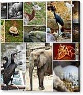 Zoo Collage Acrylic Print