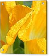 Zucchini Flowers In May Acrylic Print