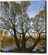 A Day Of October Acrylic Print