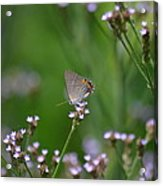 A Little Flower And Little Butterfly Acrylic Print