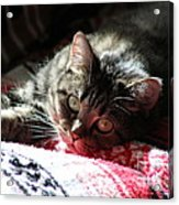 Angel Cat Acrylic Print