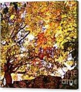 Autumn High Acrylic Print