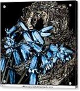 Bluebells And Log Acrylic Print