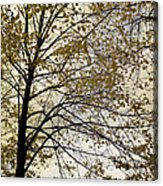 Branch Of Tree In Autumn Acrylic Print