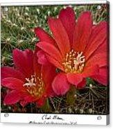 Cacti Bloom Acrylic Print