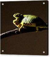 Chameleon On Branch Acrylic Print