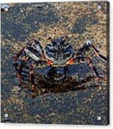 Crab And Reflection Acrylic Print