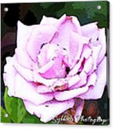 Dying Rose  Acrylic Print