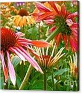 Field Of Flowers 2 Acrylic Print