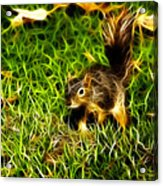 - Fractal - Pointer - Robbie The Squirrel Acrylic Print