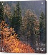 Great Smoky Mountains Morning Acrylic Print