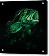 Green Fish Acrylic Print