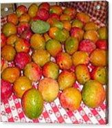 Just Picked Florida Mangoes Acrylic Print