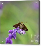 Little Skippers Happy Place Acrylic Print