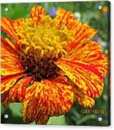Lovely Orange Speckles Acrylic Print