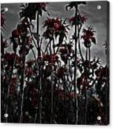 Mono Flowers Acrylic Print