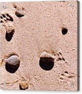Paws On The Beach Acrylic Print