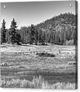 Prairie In South Lake Tahoe Acrylic Print
