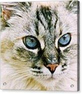 Pretty Blue Eyes--mia Acrylic Print