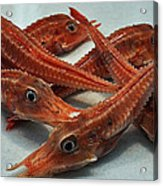 Red Cherry Shrimp In The Market Acrylic Print