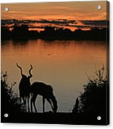 South African Sunset Acrylic Print