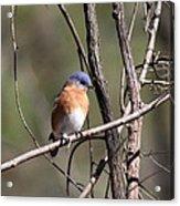 Sucarnoochee River - Bluebird Acrylic Print