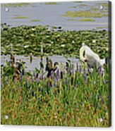 Swan And The Duck's Acrylic Print
