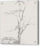 Tree In Summerhill Lake Acrylic Print