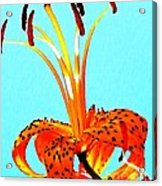 Turquoise And Tiger Lily Acrylic Print