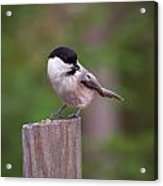 Willow Tit With Seeds Acrylic Print