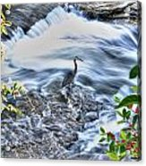 0005 Blue Heron At Glen Falls Williamsville Ny Acrylic Print