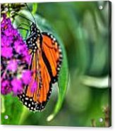 001 Making Things New Via The Butterfly Series Acrylic Print