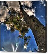 001 Reaching For The Sky Acrylic Print