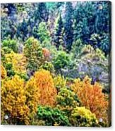 0026 Letchworth State Park Series   Acrylic Print