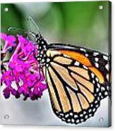 004 Making Things New Via The Butterfly Series Acrylic Print