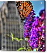 008 Making Things New Via The Butterfly Series Acrylic Print