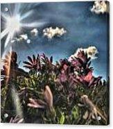 008 Summer Sunrise Series Acrylic Print