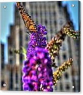 009 Making Things New Via The Butterfly Series Acrylic Print