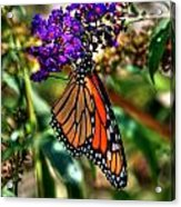 011 Making Things New Via The Butterfly Series Acrylic Print