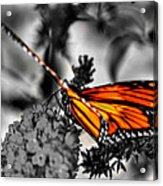 014 Making Things New Via The Butterfly Series Acrylic Print