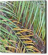 014 Palm Leaves Acrylic Print